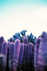 Kate Bellm - 'Purple Cactus'