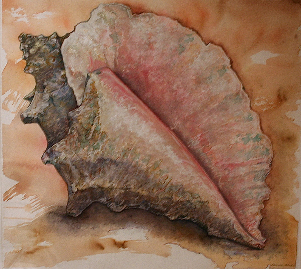 EA - CONCH SHELL