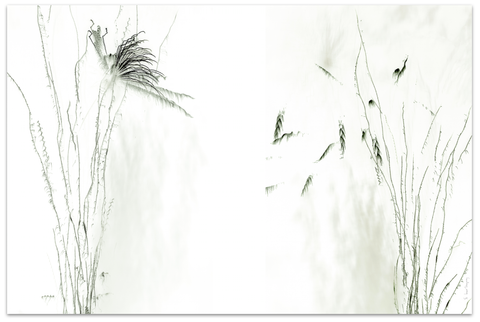 3Y (247) - LT - EPHEMERALS - GRASSES  1/8 - On aluminum, 36''x24''