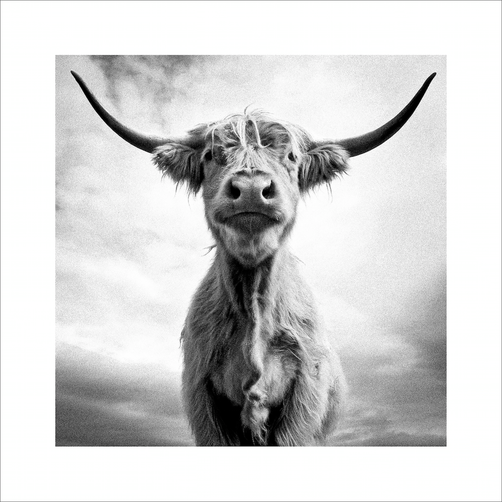 Holy Cow! - unframed