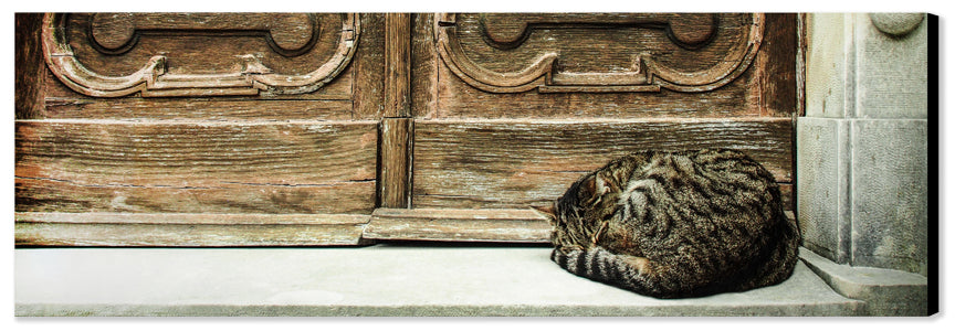 LT - SLEEPING CAT ON DOORSTEP (0681) - Canvas Print 48''x16''