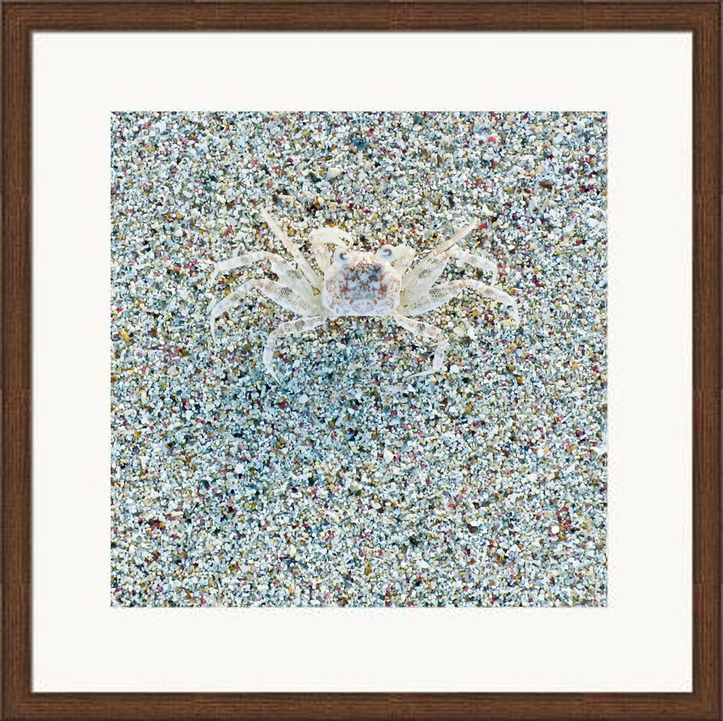 LT (206) - CRAB  4/25 - framed