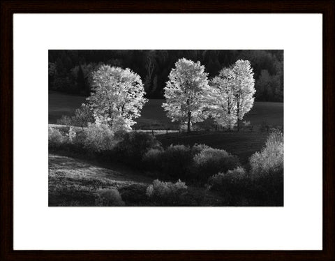 LT (182) - THREE TREES   1/50 - framed