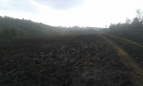burnt fields