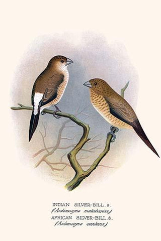 Indian Silver Bill & African Silver Bill