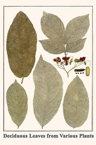 Deciduous Leaves from Various Plants