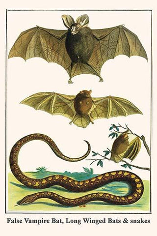 False Vampire Bat, Long Winged Bats & snakes