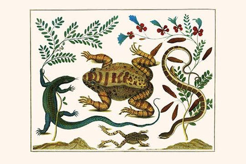 Toad, Lizard, Serpentes, Leopard Frog, Capers