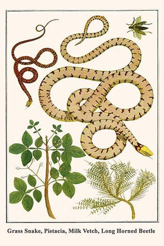 Grass Snake, Pistacia, Milk Vetch, Long Horned Beetle