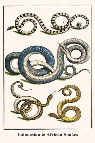 Indonesian & African Snakes