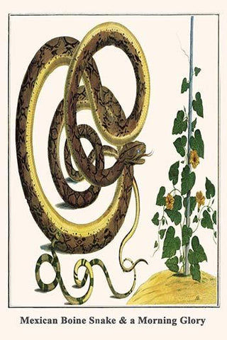 Mexican Boine Snake & a Morning Glory