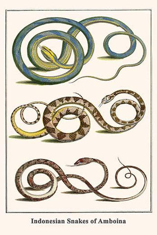Indonesian Snakes of Amboina