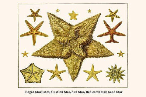 Edged Starfishes, Cushion Star, Sun Star, Red comb star, Sand Star