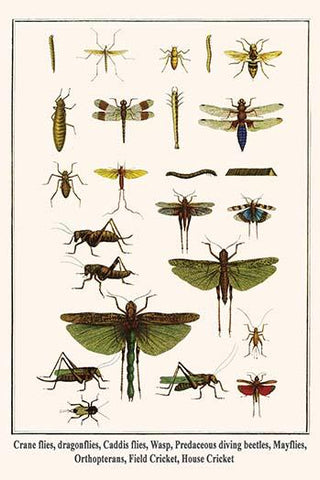 Crane flies, dragonflies, Caddis flies, Wasp, Predaceous diving beetles, Mayflies, Orthopterans, Field & House Cricket