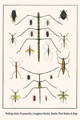 Walking sticks, Praymantids, Longghorn Beetles, Beetles, Watr Beetles & Bugs