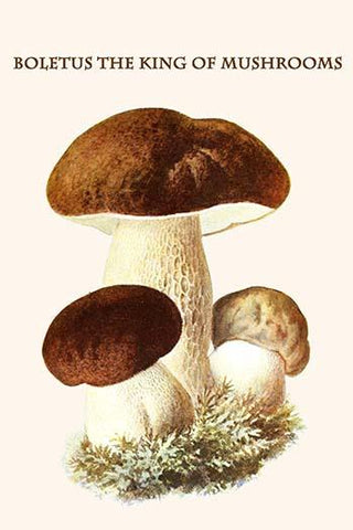 Boletus the king of mushrooms #1