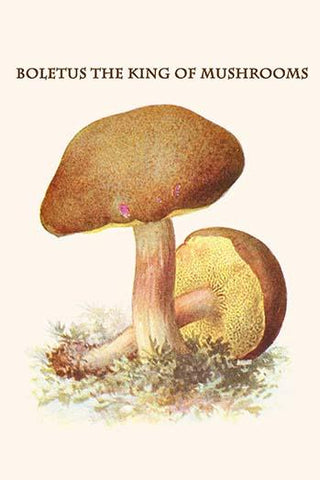 Boletus the king of mushrooms #5