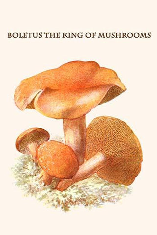 Boletus the king of mushrooms #12