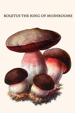 Boletus the king of mushrooms #15