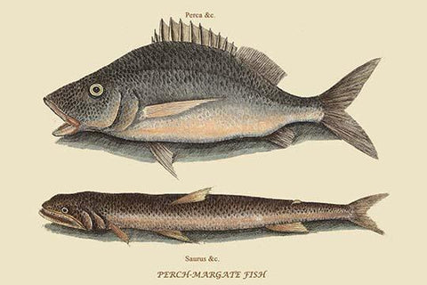 Perch or Margate Fish