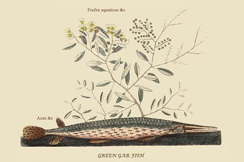 Green Gar Fish