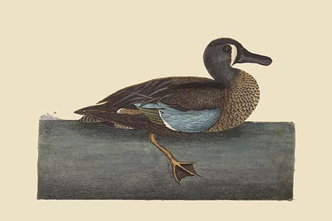 White Face Teal