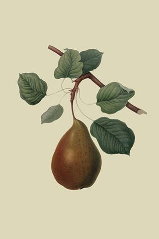 Brown's Beurre Pear