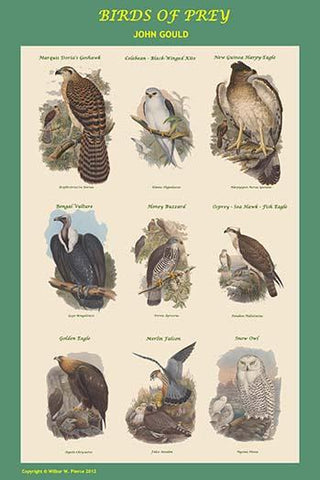 Composite Vertical Birds of Prey