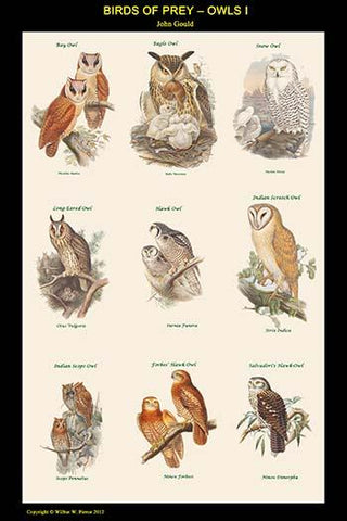 Birds of Prey - Owls - Vertical Classroom Poster I