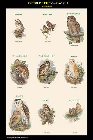 Birds of Prey - Owls - Vertical Classroom Poster II