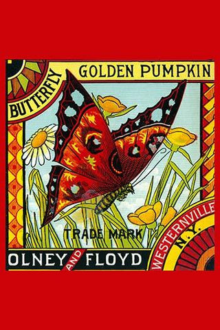 Butterfly Golden Pumpkin