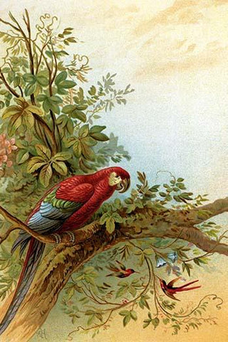 Parrot in a tree above Hummingbrds