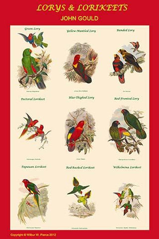 Lory & Lorikeet Composite Classroom Poster