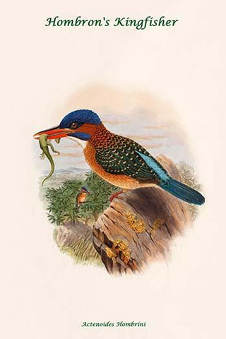 Actenoides Hombrini - Hombron's Kingfisher