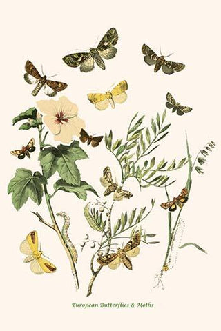 European Butterflies & Moths  (Plate 107)
