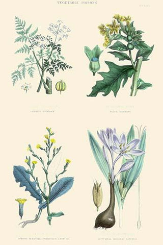 Vegetable Poisons. Common hemlock, Henbane, Strong Scented Lettuce, Meadow Saffron