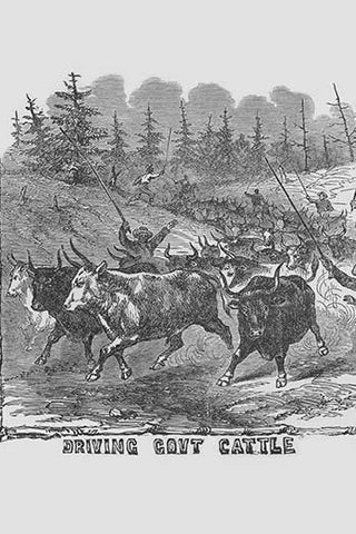 African American Cattle Drovers