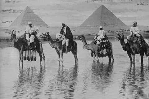 Camels with Native Riders on board stand in reflective floodwaters with a backdrop of the Pyramids of Giza In Egypt