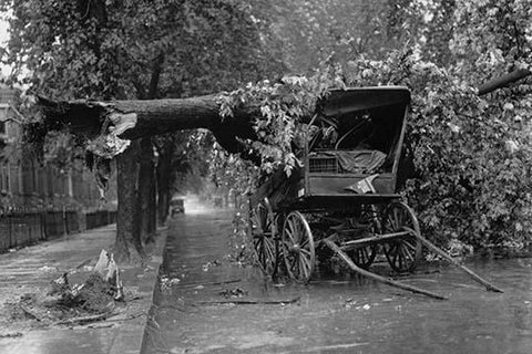 Large Tree Falls and Crushes Horse Drawn Wagon on Road