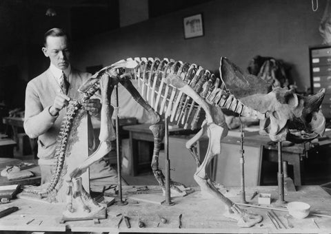 Preparing the skeleton of a baby dinosaur