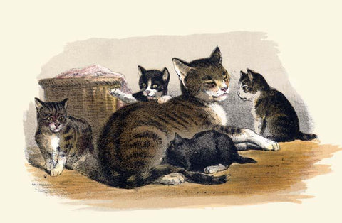Prang's Cat and Kittens