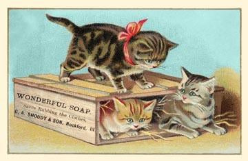 Soap Box Cats I