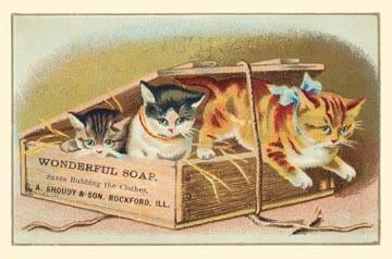 Soap Box Cats II
