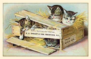 Soap Box Cats III