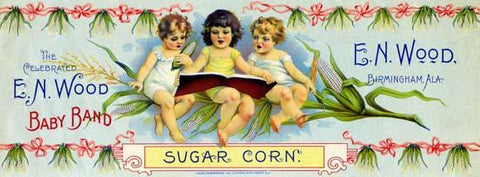Baby Band Sugar Corn