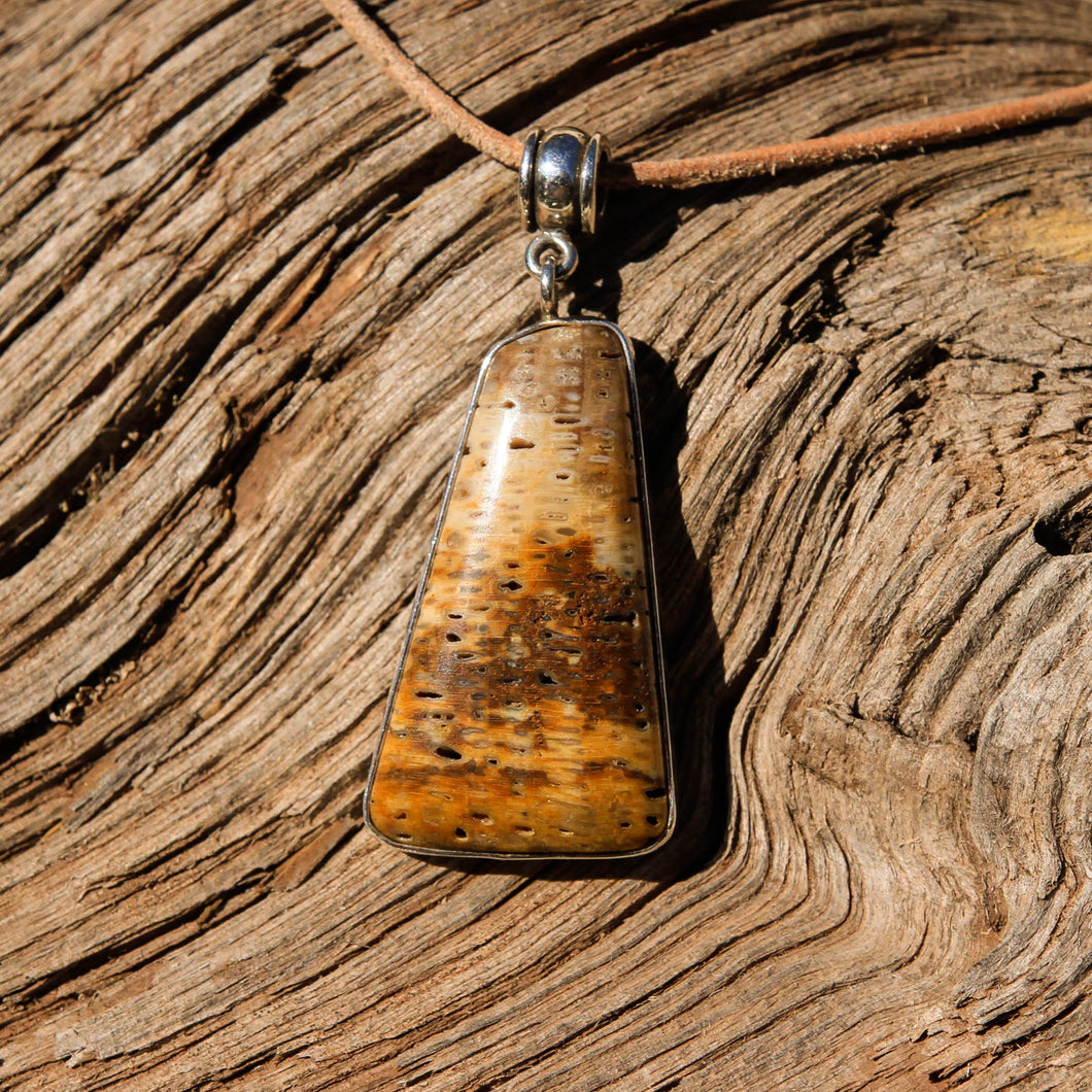 Petrified Palm Cabochon and Sterling Silver Pendant (SSP 1095)