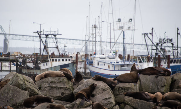 Why Do Fishermen Make Great Poets? Fishpeople went to Astoria to find out.
