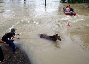 Update on horses still struggling in Texas- Our final fundraising week