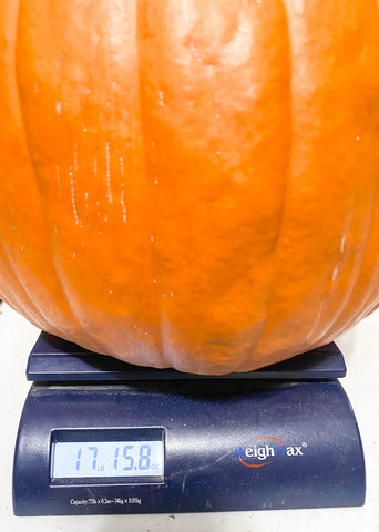 That's one heavy pumpkin, almost 18 pounds!