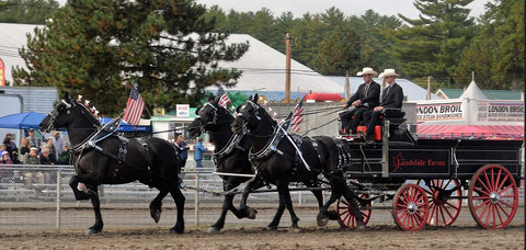 Landslide Farm Percherons at Fryeburg Fair